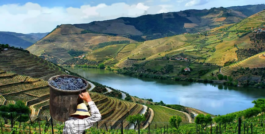 Douro_vineyard