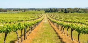 wine-tour-barossa